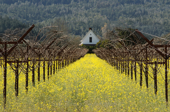 IMG_9441_St._Helena_Winter_Wine_Fields proc3